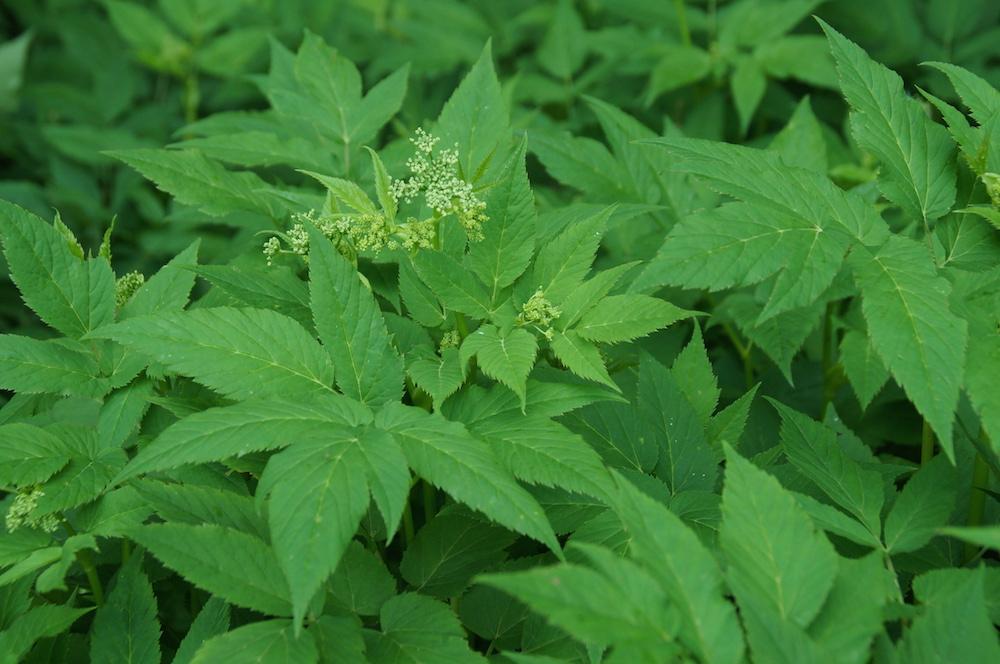 Plantes sauvages comestibles un potager offert - Cuisine plantes sauvages comestibles ...